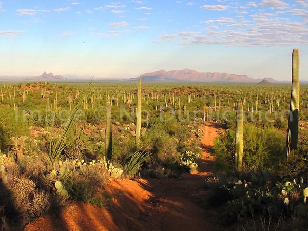 Desert & Mountain Landscapes